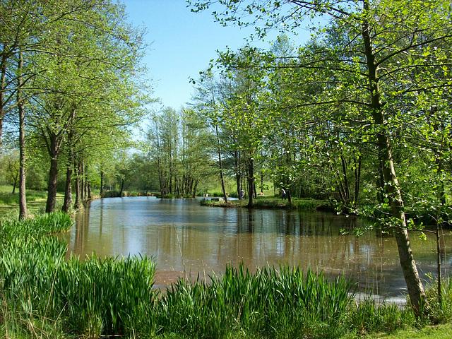 Rivière dans les Ardennes