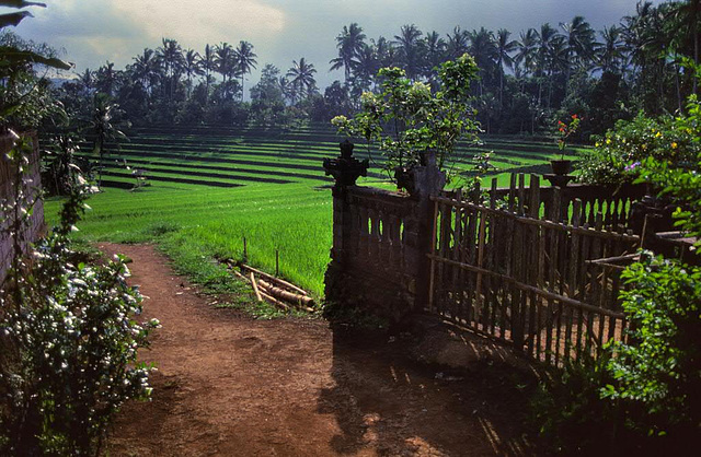 View out from a Balinese country house