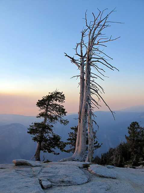 Tree on Sentinel Dome, Yosemite