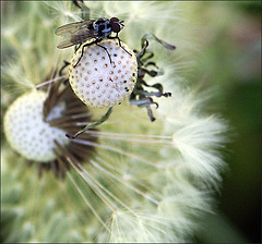 où même les mouches se font belles