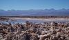 Salar de Atacama, Chili