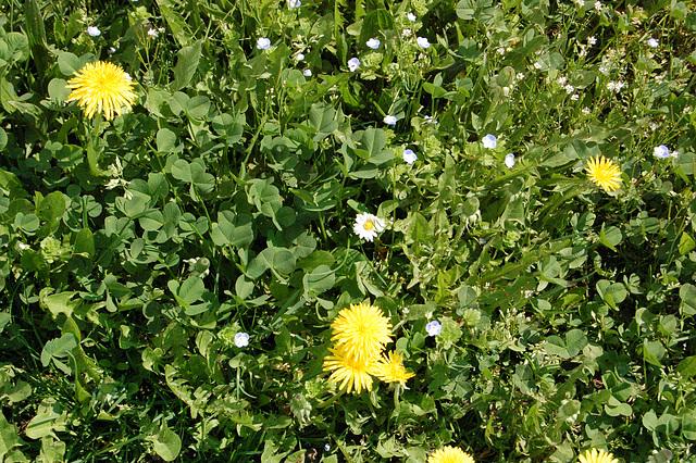 Herbejo floranta
