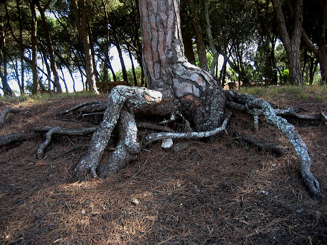 Lisboa, Park of Monsanto, scary tree