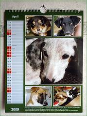 Mein Kalenderblatt