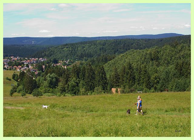 Wiesen über Altenau im Harz