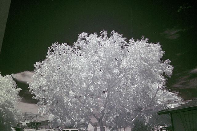 Tree & Sky (0012)