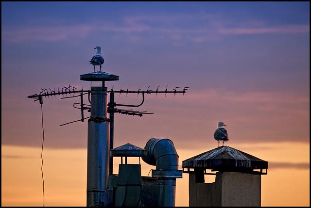 morning seagulls watching