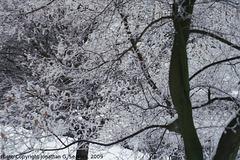 Snow in Sidliste Haje, Prague, CZ, 2009