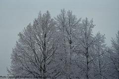 Snow in Sidliste Haje, Picture 2, Prague, CZ, 2009