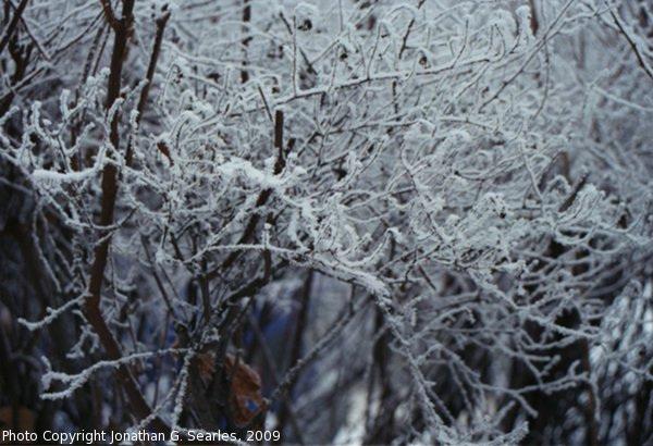 Snow in Sidliste Haje, Picture 8, Prague, CZ, 2009