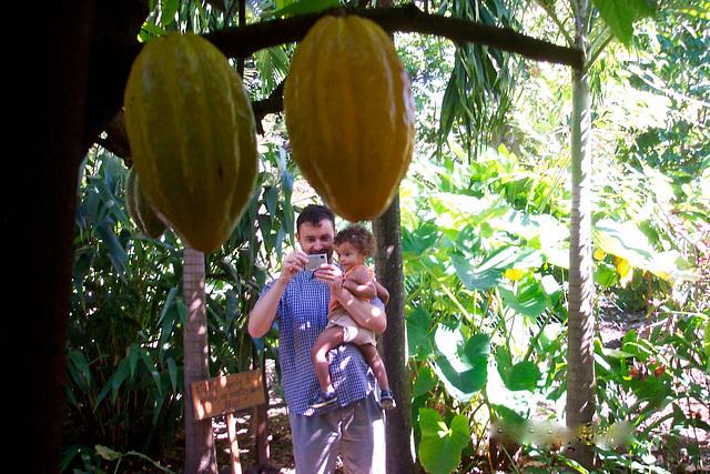 Petite histoire du cacao 2/3