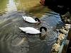 Algarve, Zoo Garden of Lagos, pas-de-deux