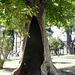Topkapi Tree, Turquie