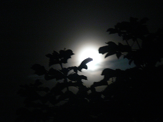 Mondnacht 2009 5./6.