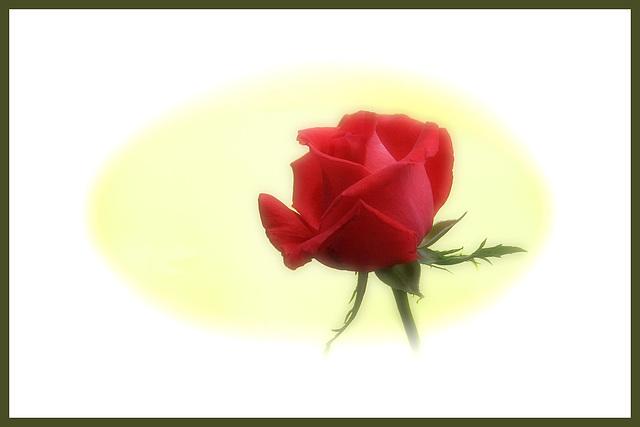Un rose en ce jour de fête