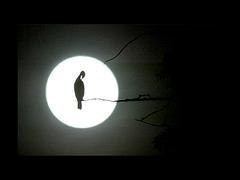 Anna Netrebko chante : O Silver Moon