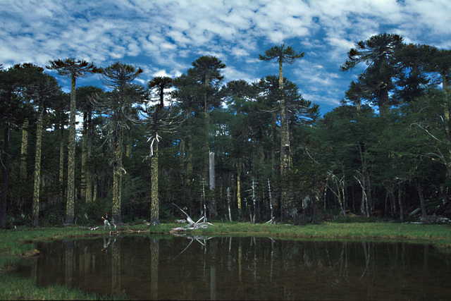Parc National Huerquehue, Chili