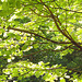Foliaro impresionisma