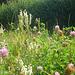 German Wildflowers
