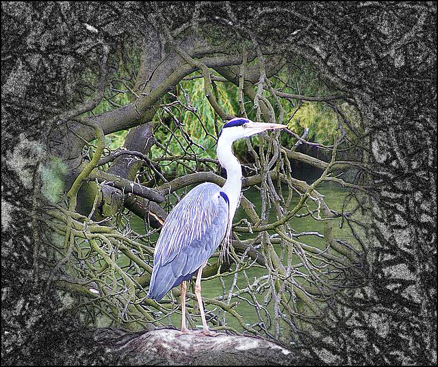 Serpentine Heron