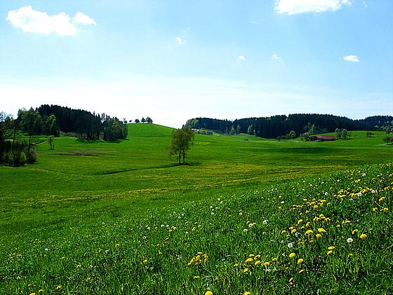 Frühling in Oberschwaben 3