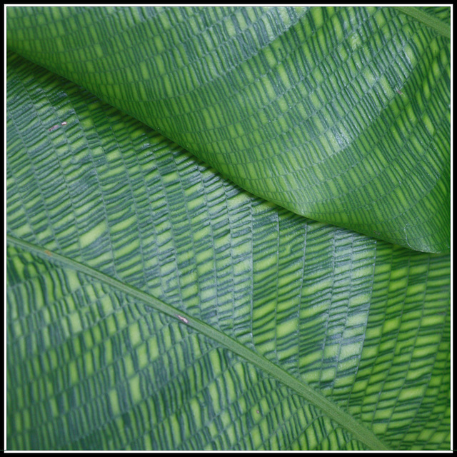 Blätter