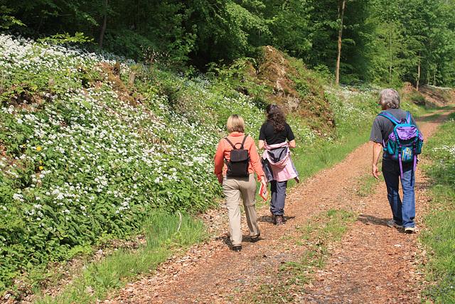 auf einem Wanderweg unterhalb der Selterklippen im Leinebergland