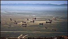 sea of ships