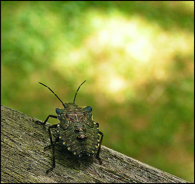 Bug on a bench