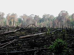 Triste spectacle ces arbres Lacanja brûlés, Mexico