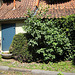 IMG 2504 Lüneburg, Hinter der Bardowicker Mauer