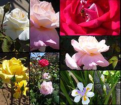 Fleures-- merci mon cher ami