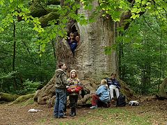 Le Grand Chêne, Allemagne