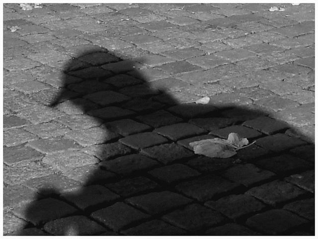 Feuille d'automne et l'ombre du photographe - 23 octobre 2008 / N & B