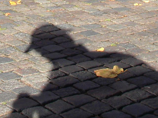Feuille d'automne et l'ombre du photographe voyeur /  Autumn leaves and the shadowman photograph voyeur - 23 octobre 2008