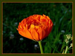 La vie en orange [ON EXPLORE]