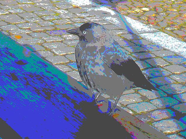 Oiseau suédois sympatique - Friendly swedish bird -  Båstad.  Suède / Sweden.   Octobre 2008 -  Postérisation photofiltrée