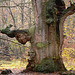 Georges Brassens chante : Le Grand Chêne