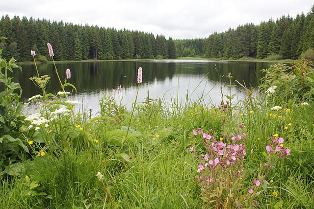 see down /es wird Abend am Nassenwieser Teich, some english