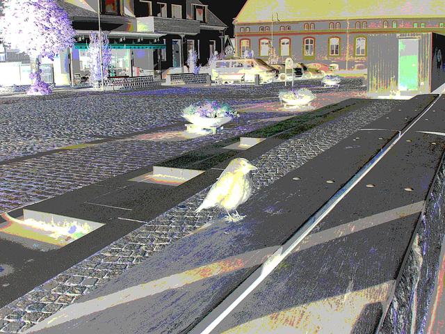 Oiseau suédois sympatique - Friendly swedish bird -  Båstad.  Suède / Sweden.   Octobre 2008-  Négatif postérisé