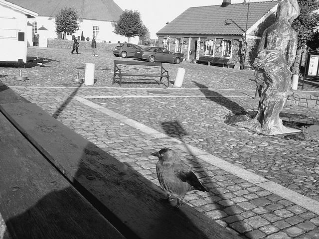 Oiseau suédois sympatique - Friendly swedish bird -  Båstad.  Suède / Sweden.   Octobre 2008 - N & B
