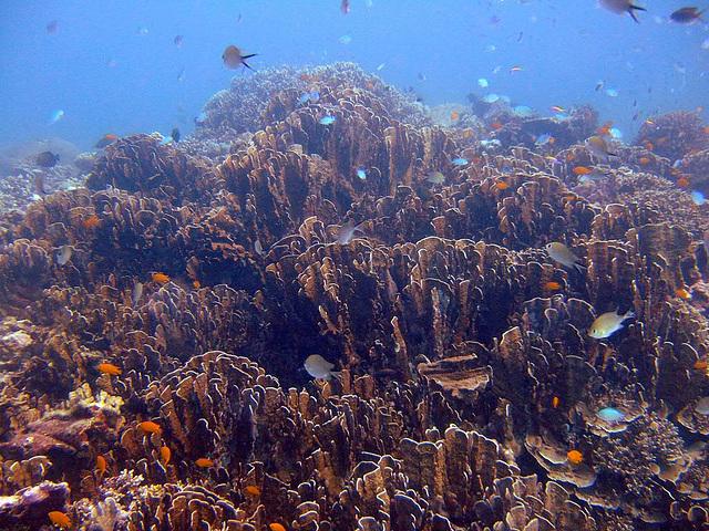 Fantastic under water landscape full of corals