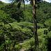 Forêt, Honduras