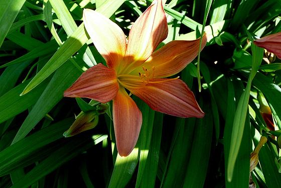 Blumen beim Nachbarn - floroj ĉe la najbaro