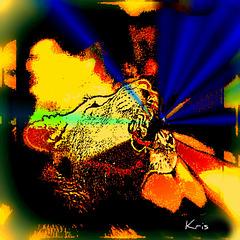 Keny Arkana comme une des instauratrices du rap féminin en France, dans un registre , oùelle laisse resortir « la rabia del pueblo » (la rage du peuple).