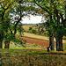 Les châtaigniers à Osny, œuvre de Camille Pissarro