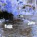 Canards sur miroir mouillé / Ducks on wet mirror  -  Ängelholm.  Suède / Sweden.  23 octobre 2008- Effet de négatif / Negative effect