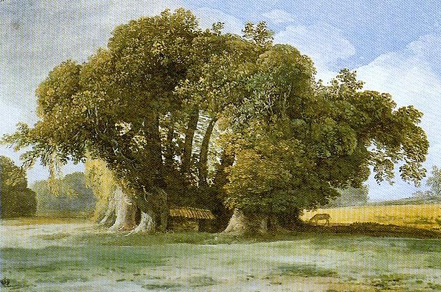 Châtaignier de Sicile, œuvre de Jean Houel