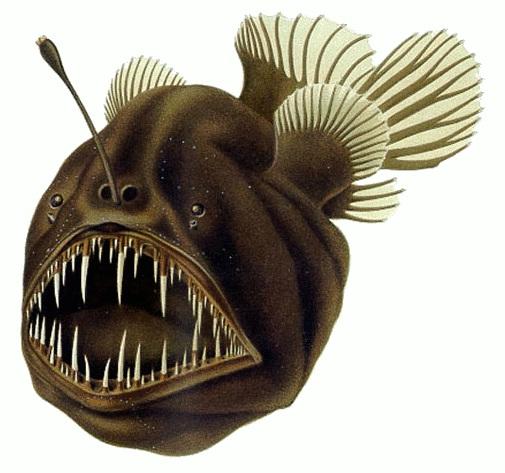 anglerfish -fiŝkaptista fiŝo /ankaŭ nomata 'mardiablo'