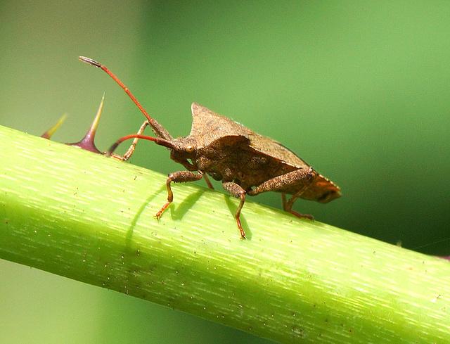 Bug-eyed!